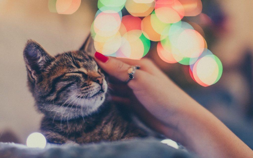 gave til katteelsker